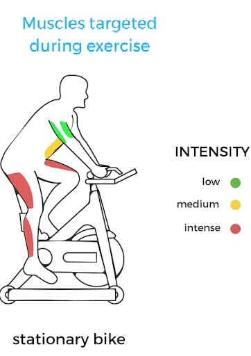 Stationary Bike-Targeted Muscles Areas
