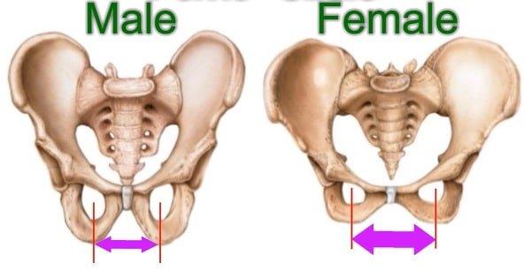 Female sit bones are wider than male sit bones