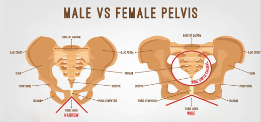 Men vs women pelvis difference